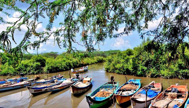 Fishing boats moored in the mangroove forest in Nagayalanka mandal of Krishna district./  Photo: T. Appala Naidu / The Hindu