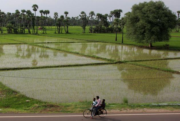 Verdant paddy fields dot the land scape on Tadikonda-Thullur stretch, a region chosen for construction of the capital of Andhra Pradesh. Photo: T. Vijaya Kumar / The Hindu