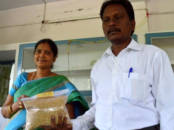 Scientists of Agricultural Research Station display MCM-103, a new paddy seed variety at Machilipatnam in Krishna District. Photo: T. Appala Naidu / The Hindu