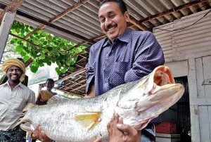 A Scientist from the Central Institute of Brackishwater Aquaculture, Chennai, holding an Asian Seabass at Nagayalanka in Krishna district.- Photo: T. Appala Naidu